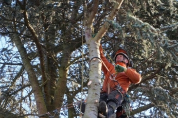 Arborex – König der Bäume