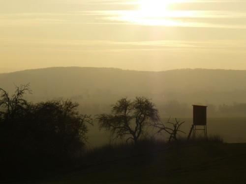 Feld mit Nebel