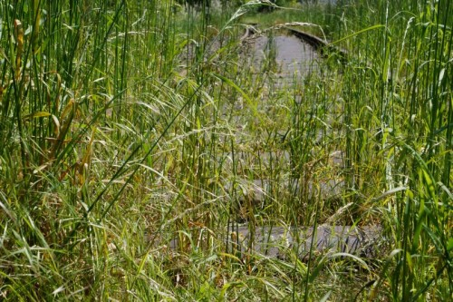 Schienen mit Gras