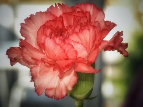 flower-1021075_640 (1)