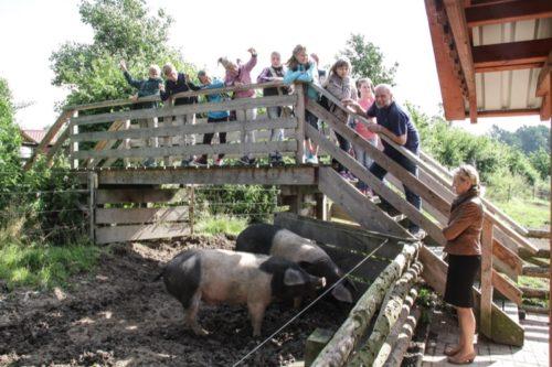 Artgerecht - Erläuterungen zu den Schwäbisch Hällischen Schweinen gab Landwirt Friedo Petig