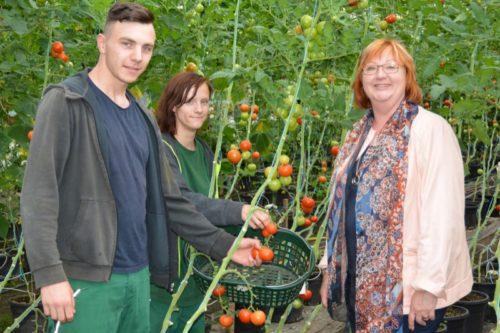 Gartenarbeit im Heidehaus: Die beiden Auszubildenden zeigen der SPD-Bundestagsabgeordneten Petra Rode-Bosse die reiche Tomatenernte.
