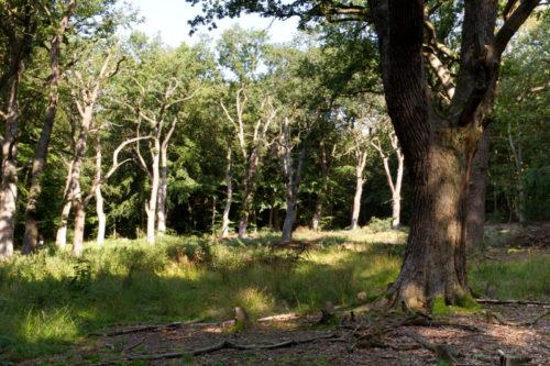 Die Hudewaldreste in der Nähe der Externsteine bieten ein schönes Motiv für Naturfotografie. (Foto: Landesverband Lippe)