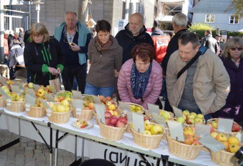 Viele Besucher beim Apfeltag staunten über die Vielfalt von Apfelsorten und probierten ohne Ende